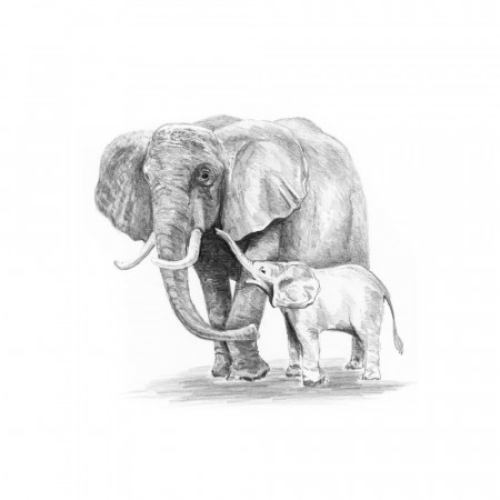 Sketching (MINI) - Elefant med unge